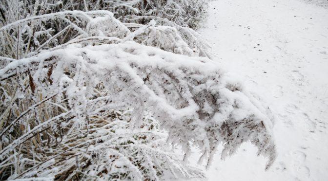 Die schönen und die häßlichen Seiten des Winters