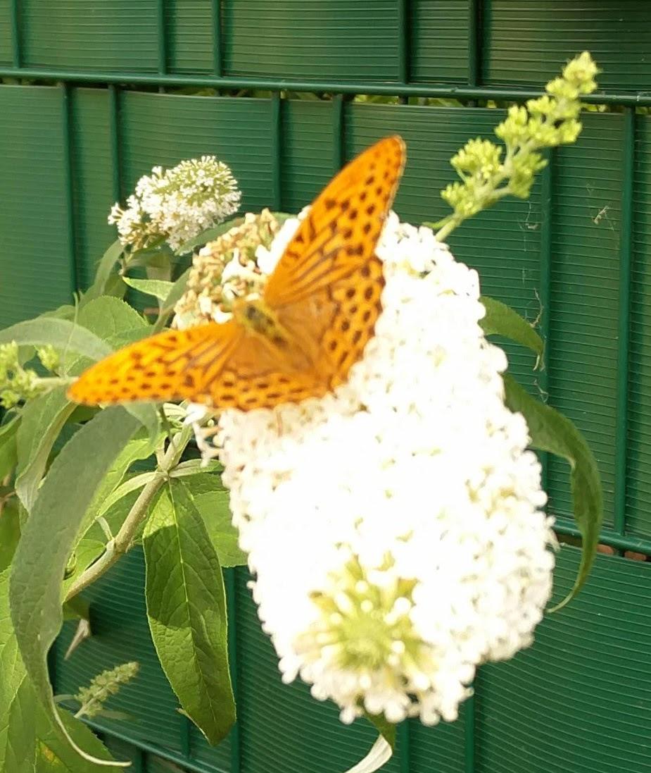 5577f4ec226800 Blumen und Sträucher | in Haus und Garten